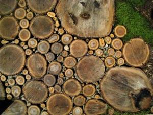 wood-slice-walkway