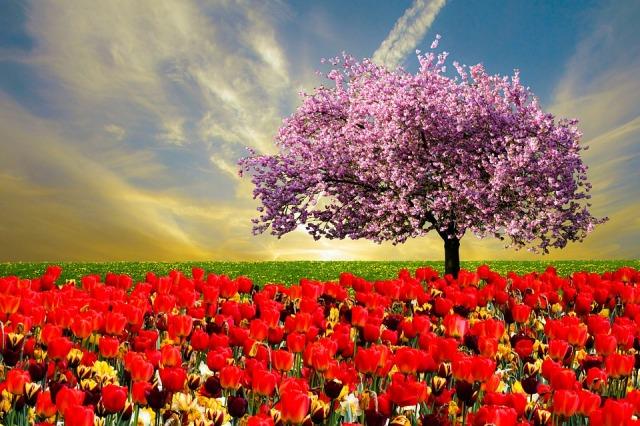 spring-fever
