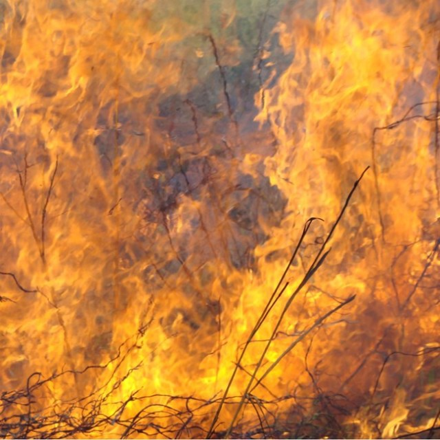 Flames-with-grass_1